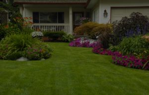 Lawn service in Middletown Delaware