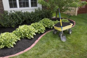 Mulching around bushes in garden