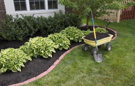 Mulching around bushes in garden