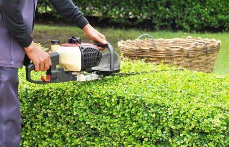 Landscape services hedge trimming