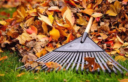 lawn mowing and raking leaves